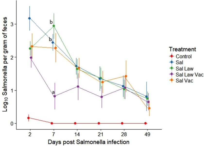 Leite Ileitis vaccination salmonelle co infection